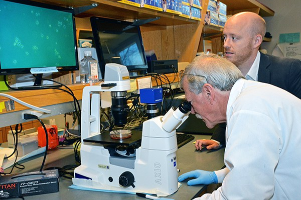Primary Tumor Cell Culture co-director Thomas Ribar observes a new cell line while Kris Wood, PhD, looks on.